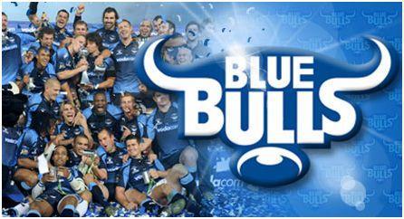 Blue-Bulls.jpg
